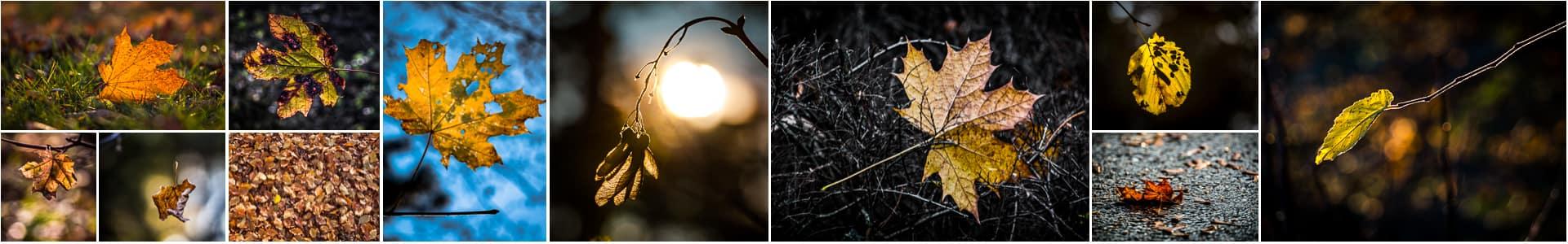 Fotoworkshop bunter Herbstwald