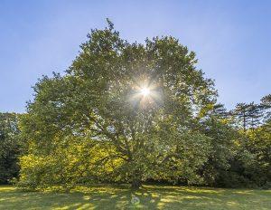 Plantane - Fotokurse Martin Winkler