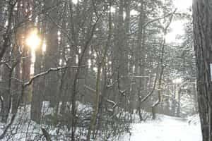 Fotokurse Wien - Wald alt