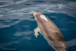 Whalewatching-Fotoreisen mit Martin Winkler