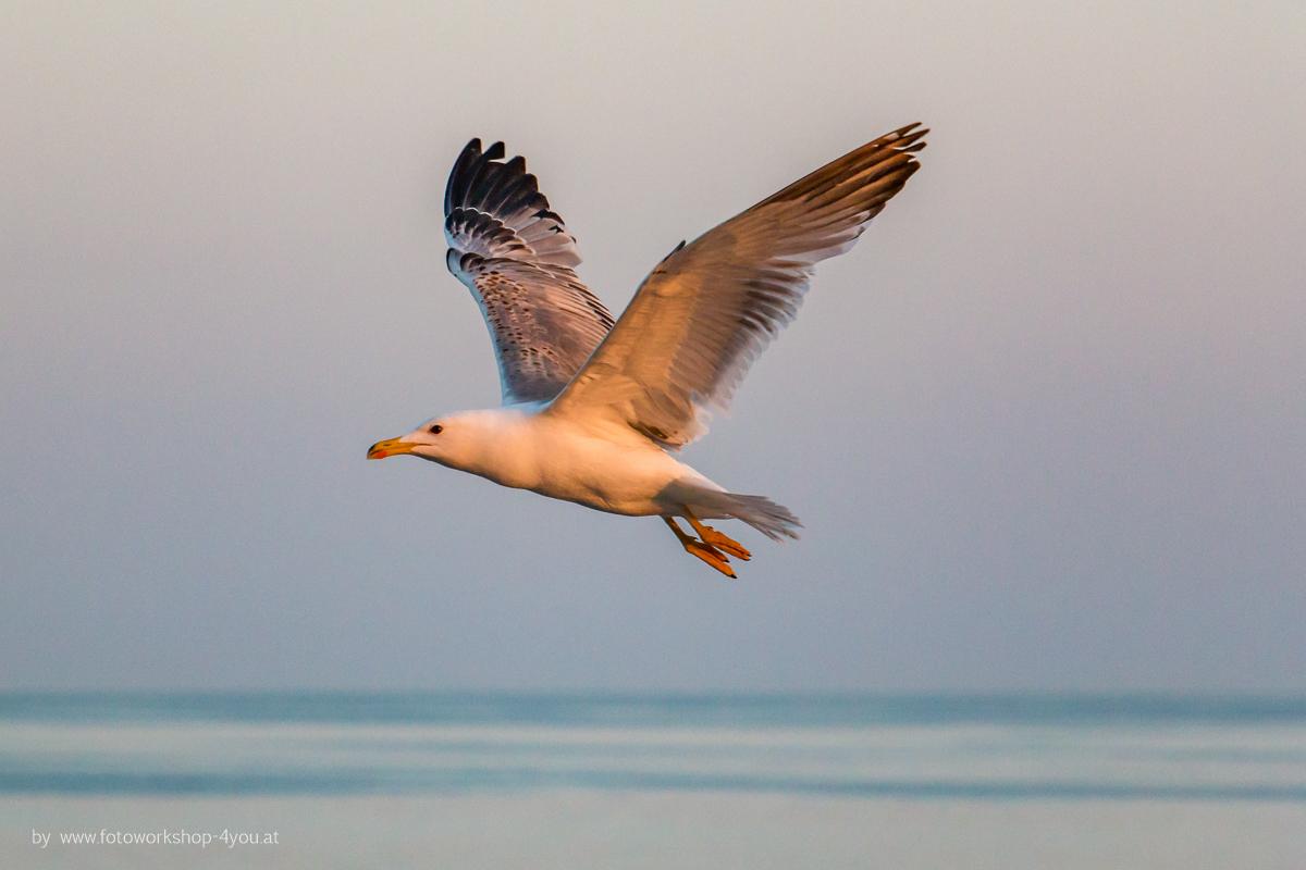 Möven im Flug - Fotokurse mit Martin Winkler