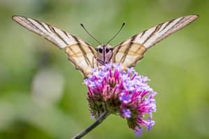 Fotografieren lernen - Schmetterling neu