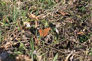 Fotografieren lernen - Schmetterling alt