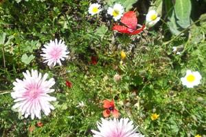 Fotokurs Bildgestaltung - Beispiel Blumen