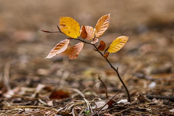 Herbstwald 2 - Fotokurse Martin Winkler