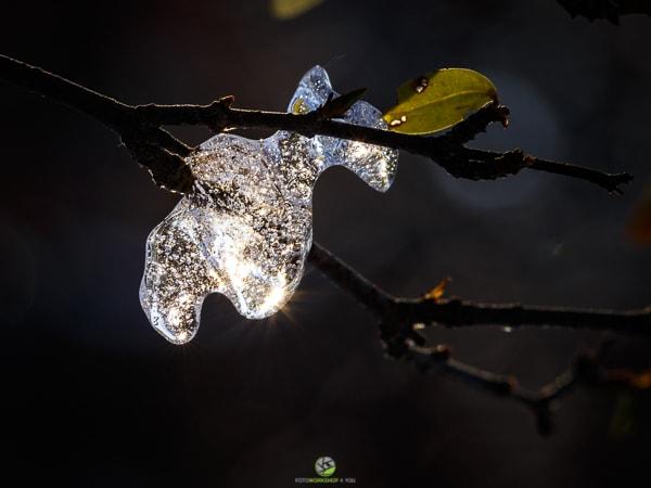 Eismakros - Fotokurse Martin Winkler