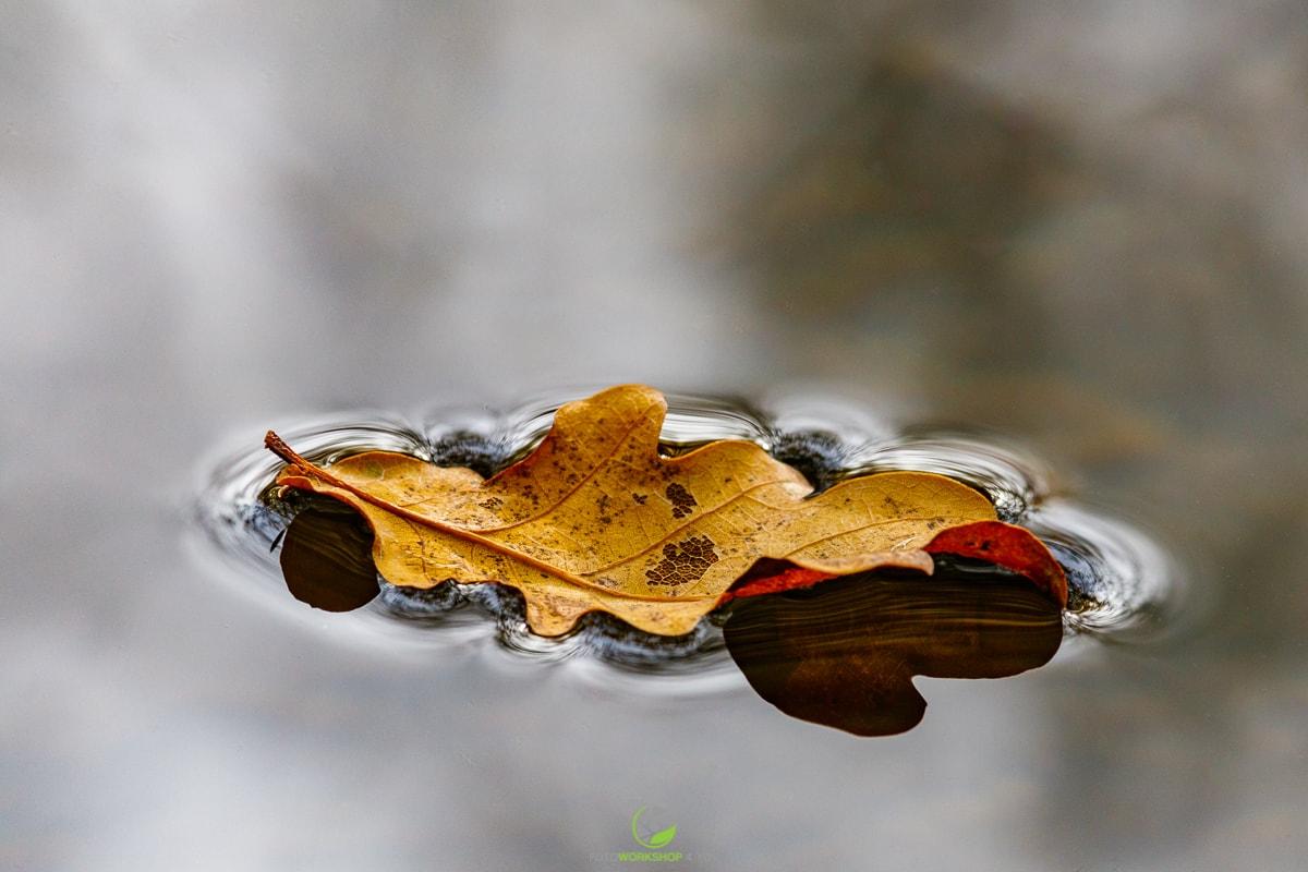 Blatt im Wasser
