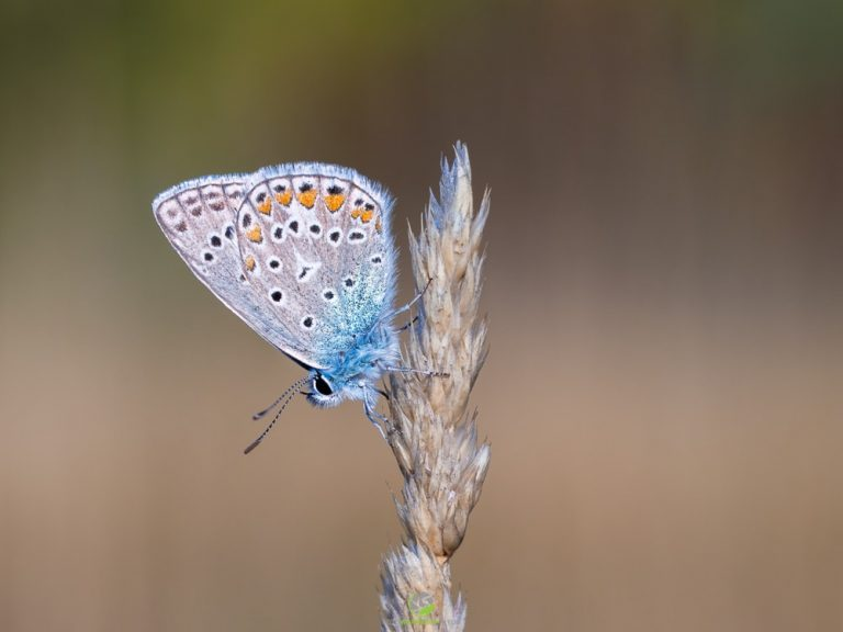 Schmetterling am Eichkogel
