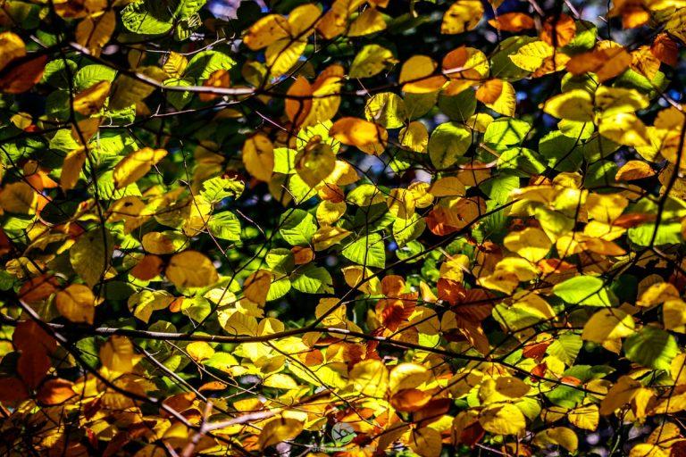 Muster - Herbstwald
