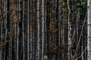 Muster - Wald1