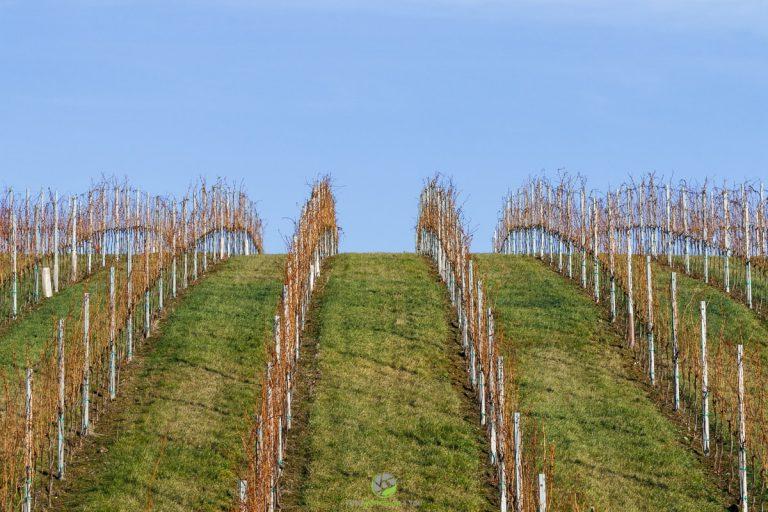 Muster - Weingarten2