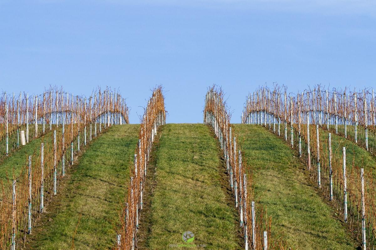 Weingarten2