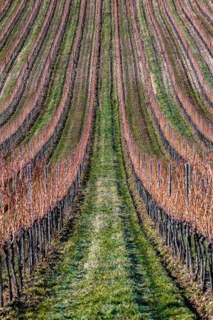 Muster - Weingartensymmetrie