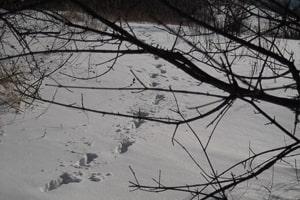 Foto Spuren im Schnee alt