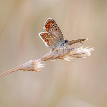 Schmetterling Fotokurse Martin Winkler Basic-Kurs