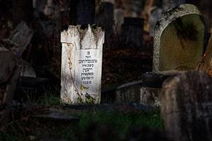 Fotoworkshop Zentralfriedhof