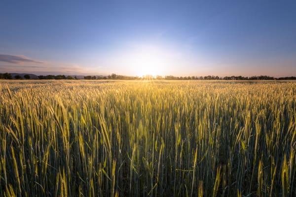 Sunset-Felder
